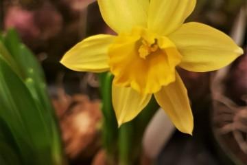 Yellow blow